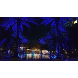 Color changing palm trees using LED Inground